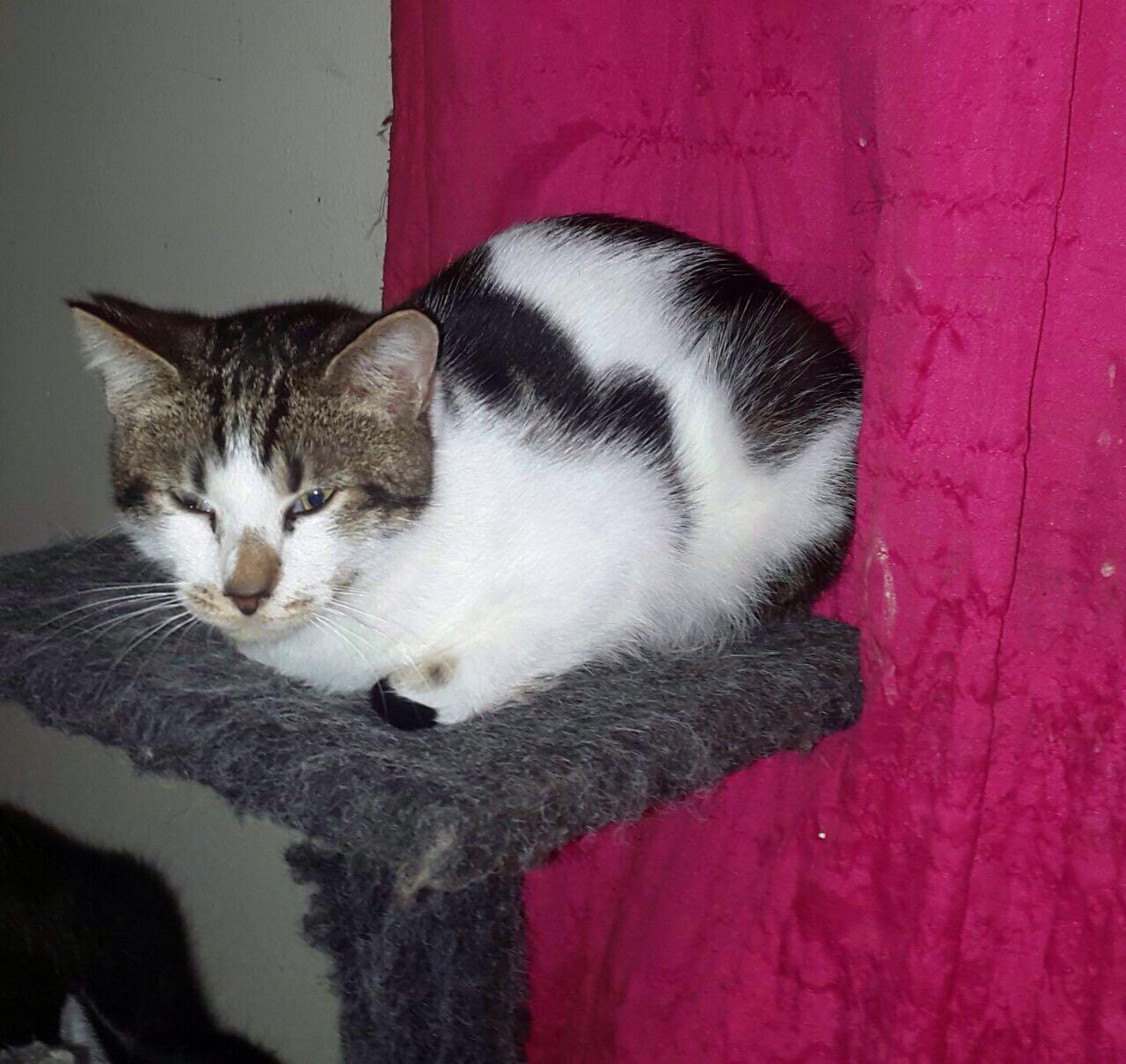 CRO Animal Rescue - Animal Rescue and Pet Adoption Cape Town