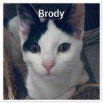 Meet Brody