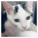 Meet Finn