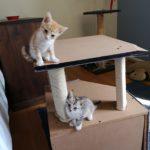 Meet Glazey & Lily
