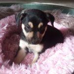 Meet Paisley